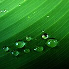 Rain Drops on the leaf by Ana  Marija
