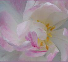 Pastel by Victoria Jostes