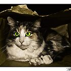 Cat in the Bag by Theodore Black