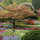 Layers of Colour in Butchart Gardens by Chris Allen