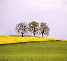 Lonely Trees  by Mario Curcio