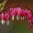 Bleeding Hearts by David Freeman