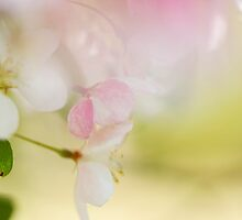 Feels Like Spring by Jayne Le Mee