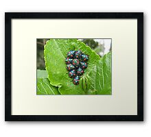 Guess Who Had Baby Beetles. Framed Print
