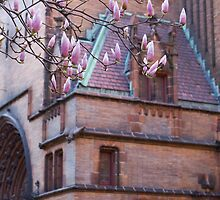A Sign of Spring in the Churchyard by ElyseFradkin