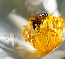 Busy Little Bee by Scott  Dyer