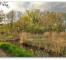 Dutch Swamp,...Groningen ,the Netherlands,Europe by Aheroy