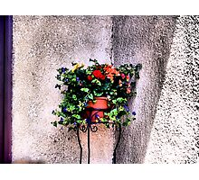 The Corner Flower Pot Photographic Print