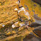 Quartz and Lichen, Sulphur Creek, Tasmania, Australia. by kaysharp