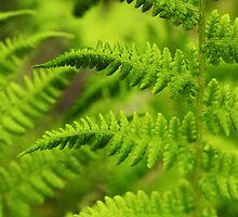 Frond by Doug Keech