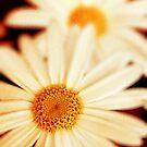 .:Daisies:. by Silvia Ganora