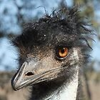 &quot;Look what the emu oil did to my hair!&quot; by Enivea