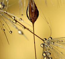Dandelion Seeds by Sharon Johnstone
