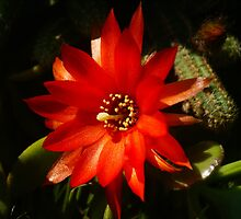 cactus flower by seccotine