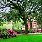Savannah Squares In the Spring by Mary Campbell