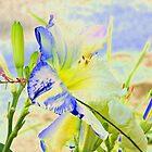 Altered Flowers by Lesley Rosenberg
