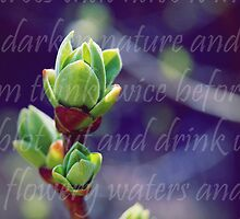 Lilacs and Frost by Debbie-Anne Parent