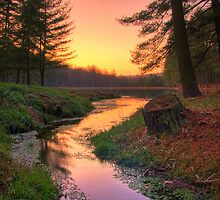 Sunset on a Remote Forest Lake by Michael Mill