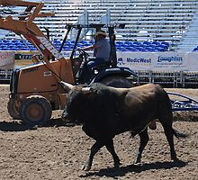 Work'n the Bull...And Dirt.... by EvaMarie Cannon