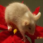 christmas mouse 2 by Maddison Gangi