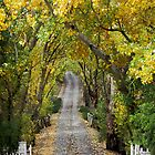 ~ Autumn in the Adelaide Hills ~ by LeeoPhotography
