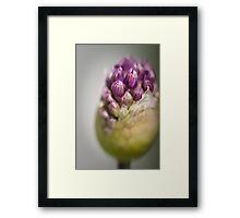 Spring Beauty 1 Framed Print