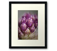 Spring Beauty 2 Framed Print