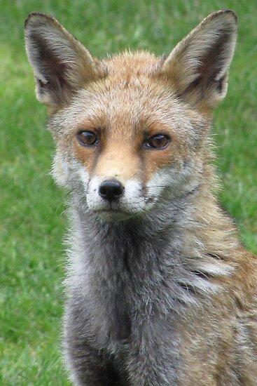 Portrait of Miss Foxy by John Thurgood