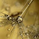 Droplets Of Gold by Sharon Johnstone