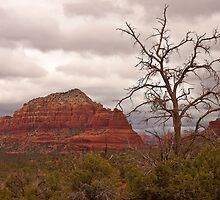 Sedona, Arizona Red Rocks by Barb White