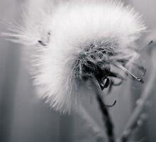 Fuzzy Wishes  by KimberlE