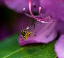 Azalea, Spider and Shadow by Gene Walls