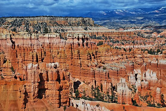Bryce Canyon by Barbara Manis