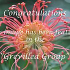 Grevillea Group Feature Banner by MissyD