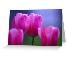 Misty Tulips Greeting Card