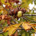 The Last Of The Conkers by coffeebean