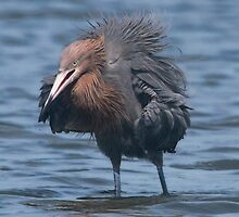 Now this is a bad feather day ! by Karen  Moore