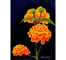 Dawn's flowers Photographic Print