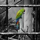 Colour behind bars by Rob Hawkins