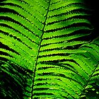 Fern by Paul Finnegan