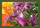 challenge project- two colors of tulips by LisaBeth