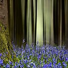 . . in and out the dusty bluebells . . .  by outwest photography.co.uk