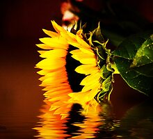Sunflower Bathing by George Lenz