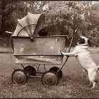 Pugs and a Buggy by MindsImage
