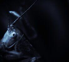 The Predator.. by tchebytchev
