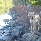 Kahlua watching the ducks! by Christopher Clark