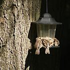 Sleepy Sparrows at Feeder by Margie Avellino