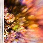~ autumn bokeh ~ by Adriana Glackin
