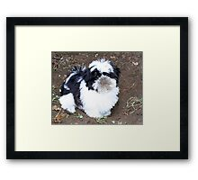 The Kitty did it ...it's twoo  !             Framed Print