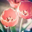 tulips portrait by Buntywabbit